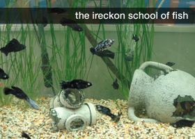 Ireckon school of fish